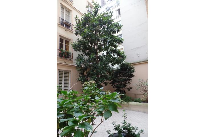 Location appartement 4 pièces 96m² - 1891
