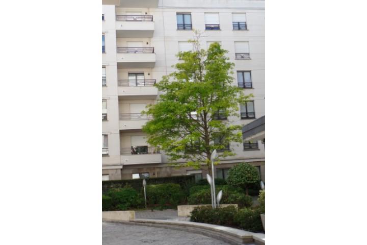 Location appartement 2 pièces 53m² - 1894