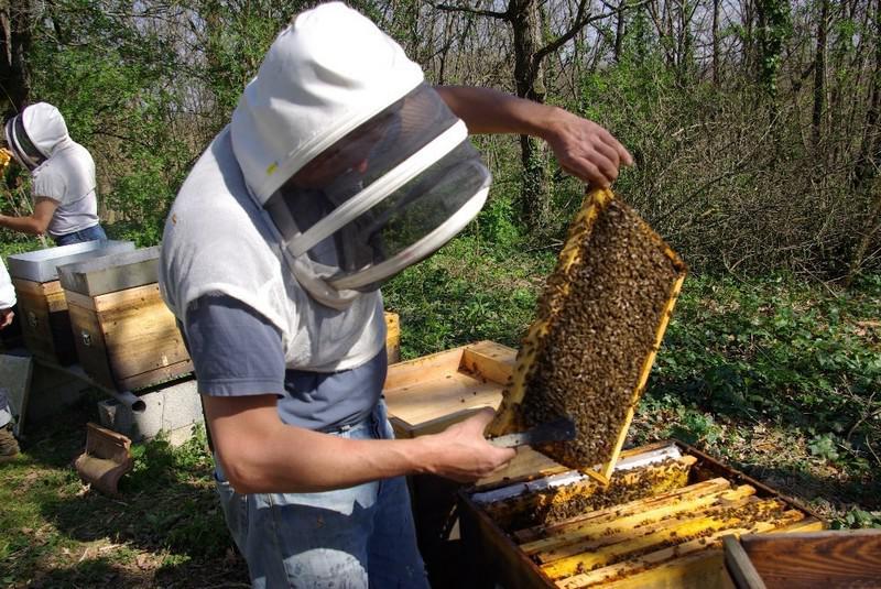 Visite des ruches au printemps
