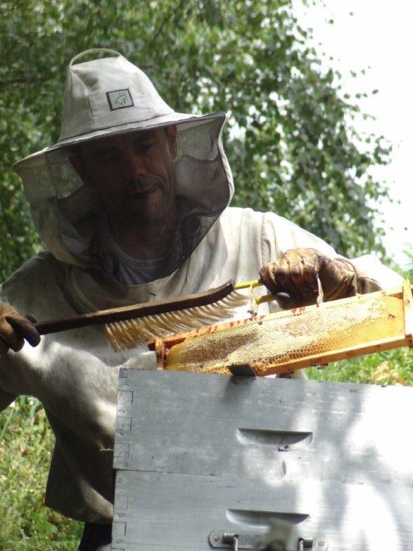 doucement avec les abeilles pendant la récolte