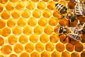 le rucher de netreville