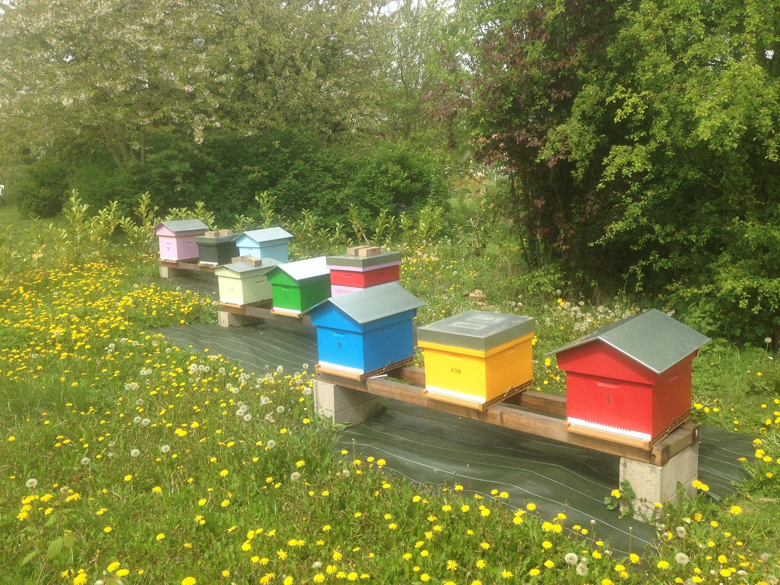 notre rucher en avril 2015