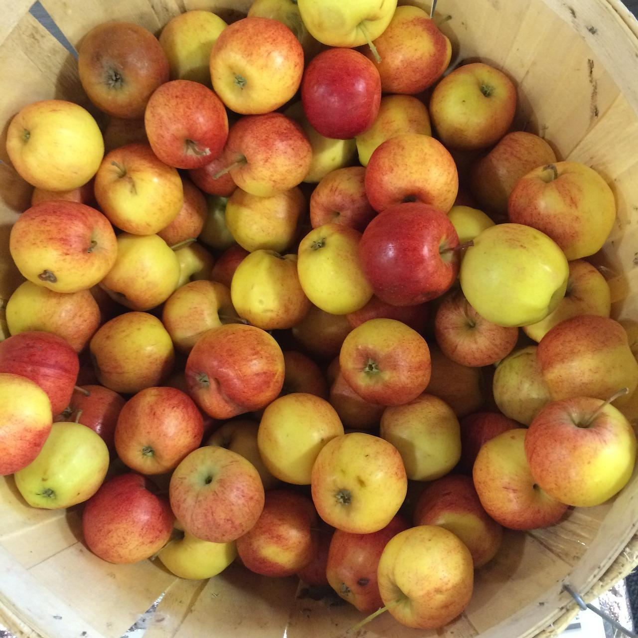 pommes du verger