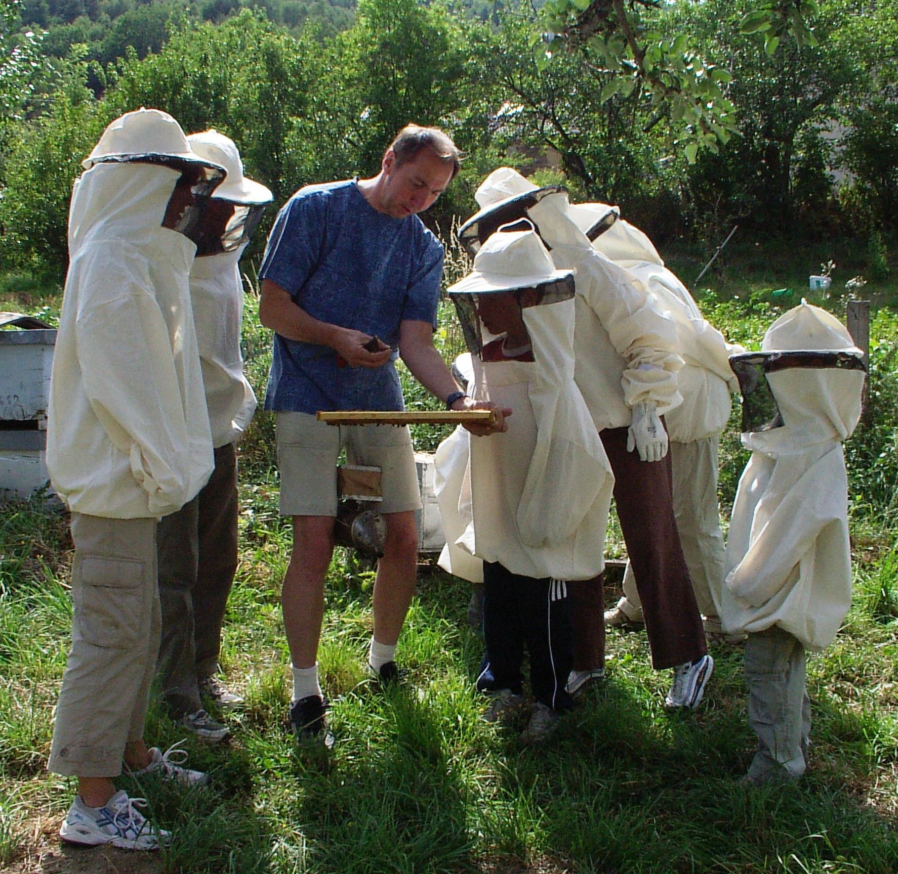 ouverture de la ruche avec des touristes