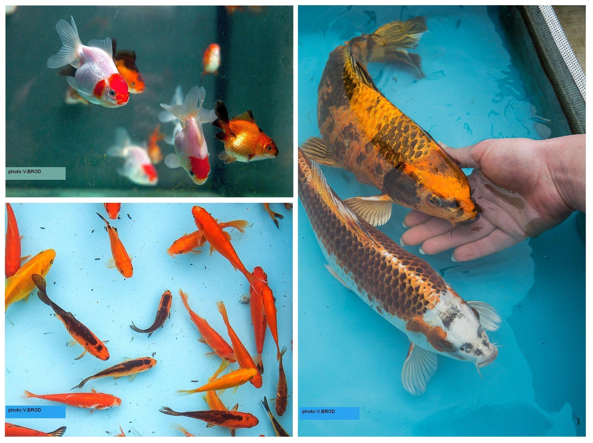 Nés et élevés à la pisciculture