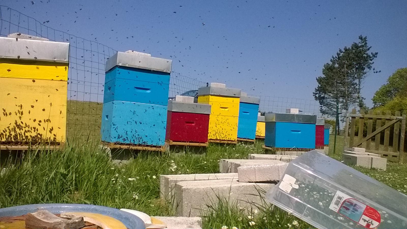 Activitée au rucher