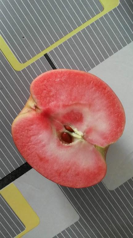 La pomme à chair rouge