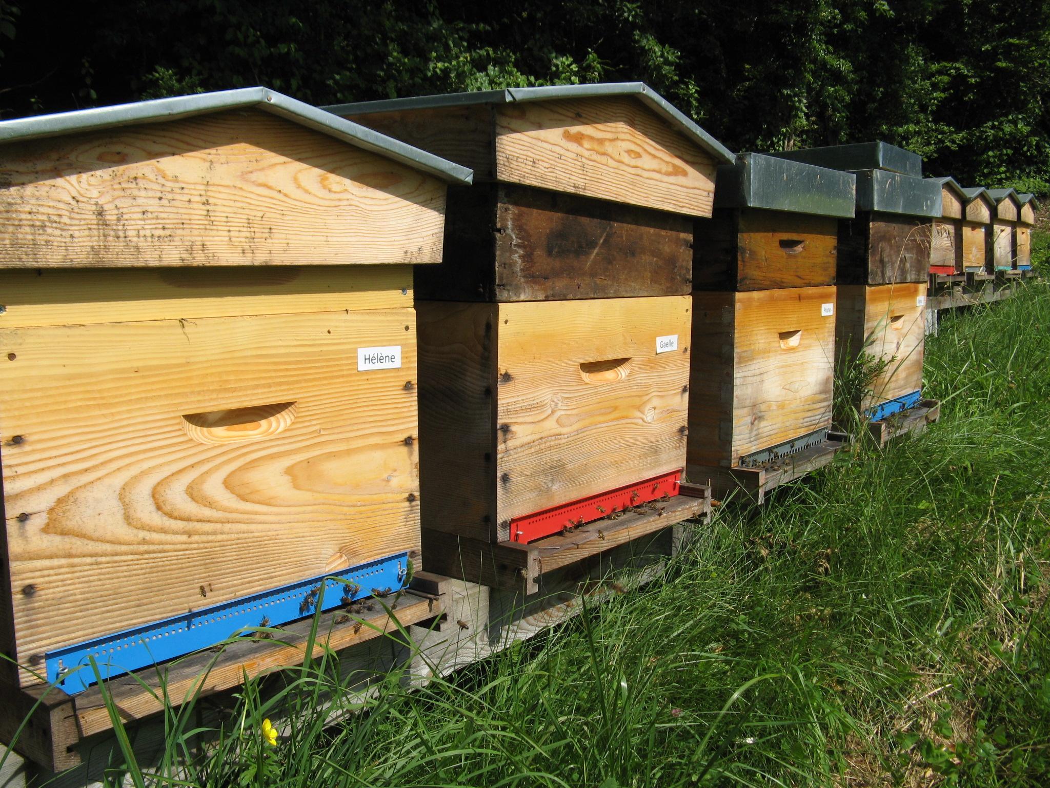 Les ruches en zone naturelle