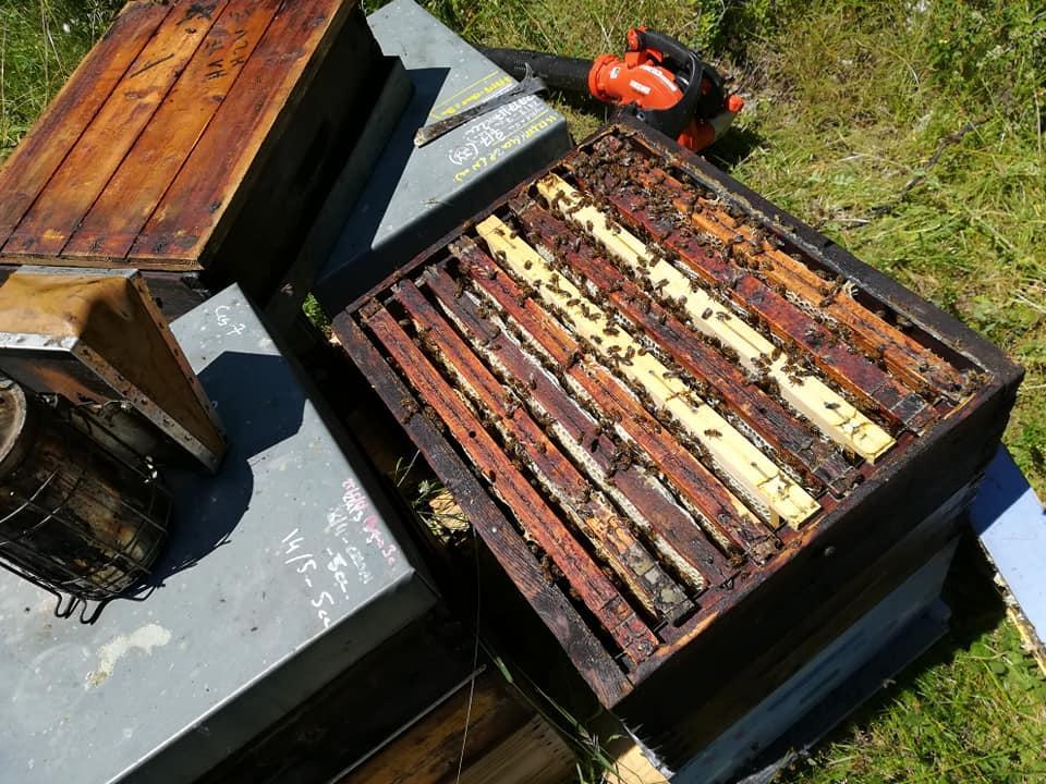 Jour de récolte du Miel de Montagne