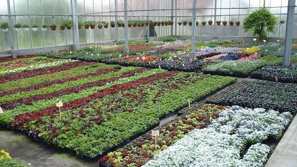 Plantes à massif