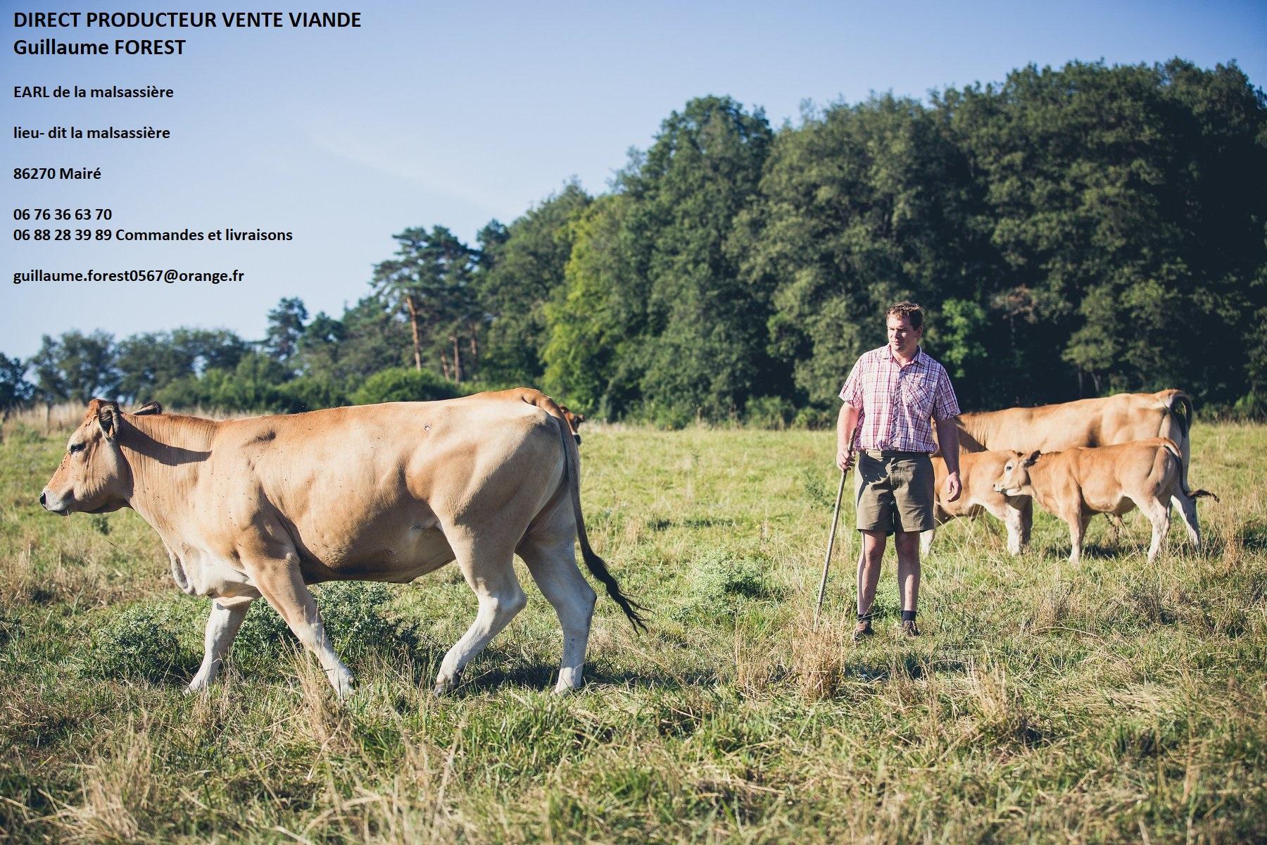 Pâturage des vaches 8 mois/ an