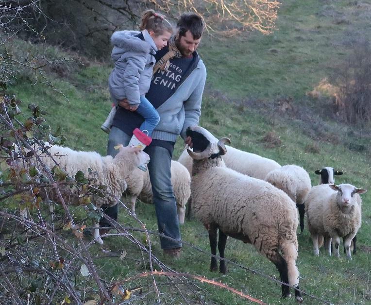 Fol agneau