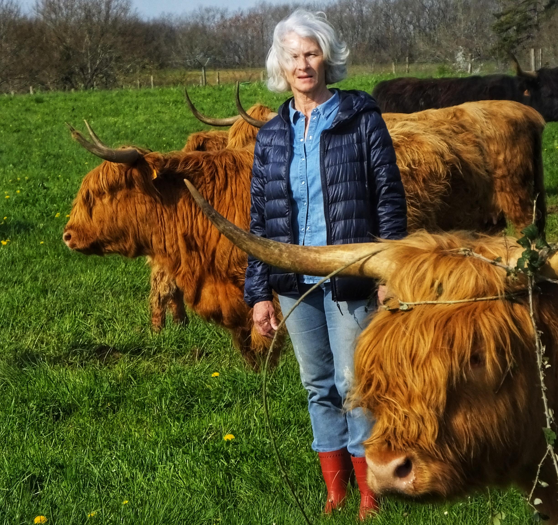 Elevage Highland Cattle BIO