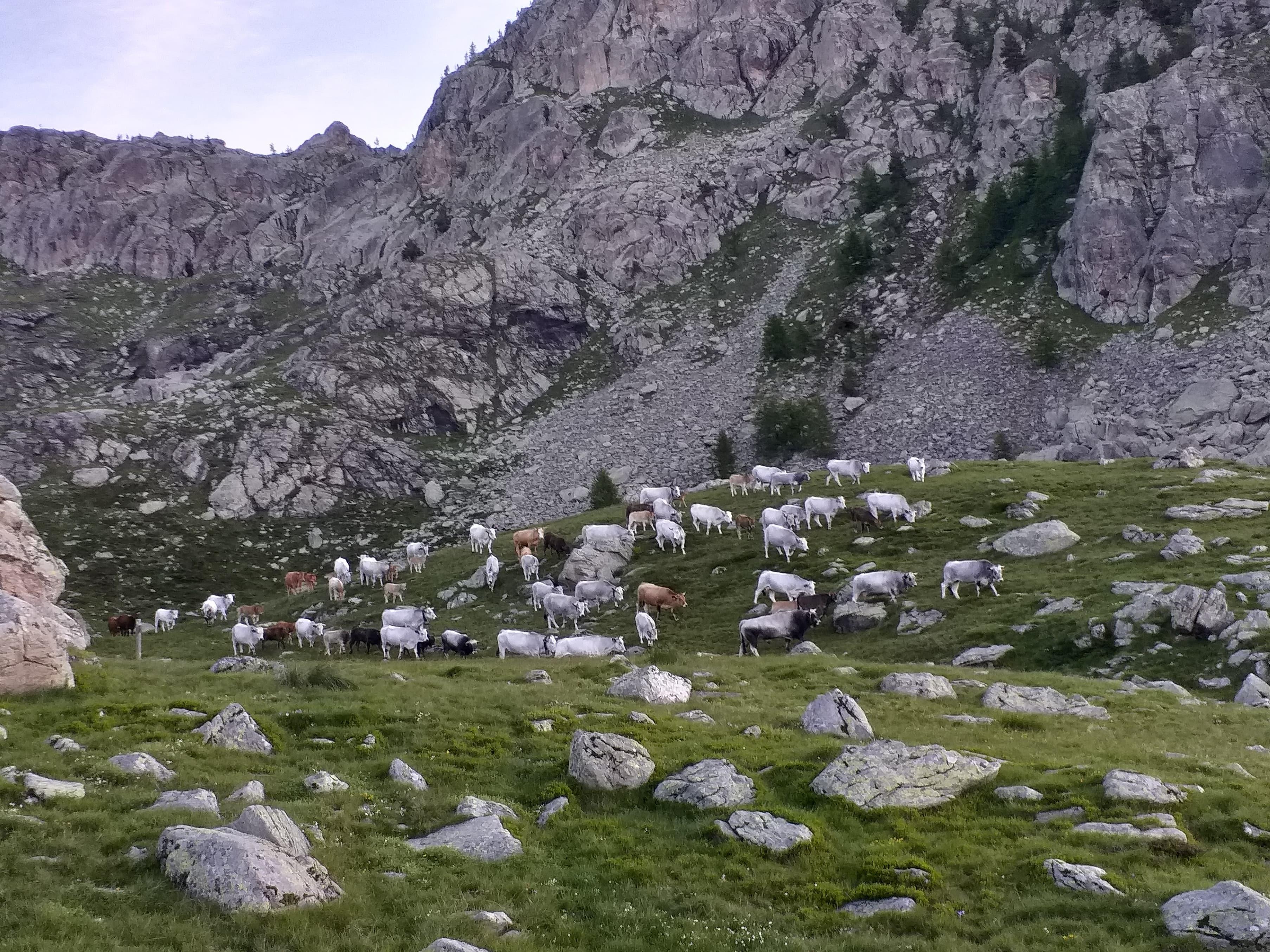 Le troupeau en pleine montagne
