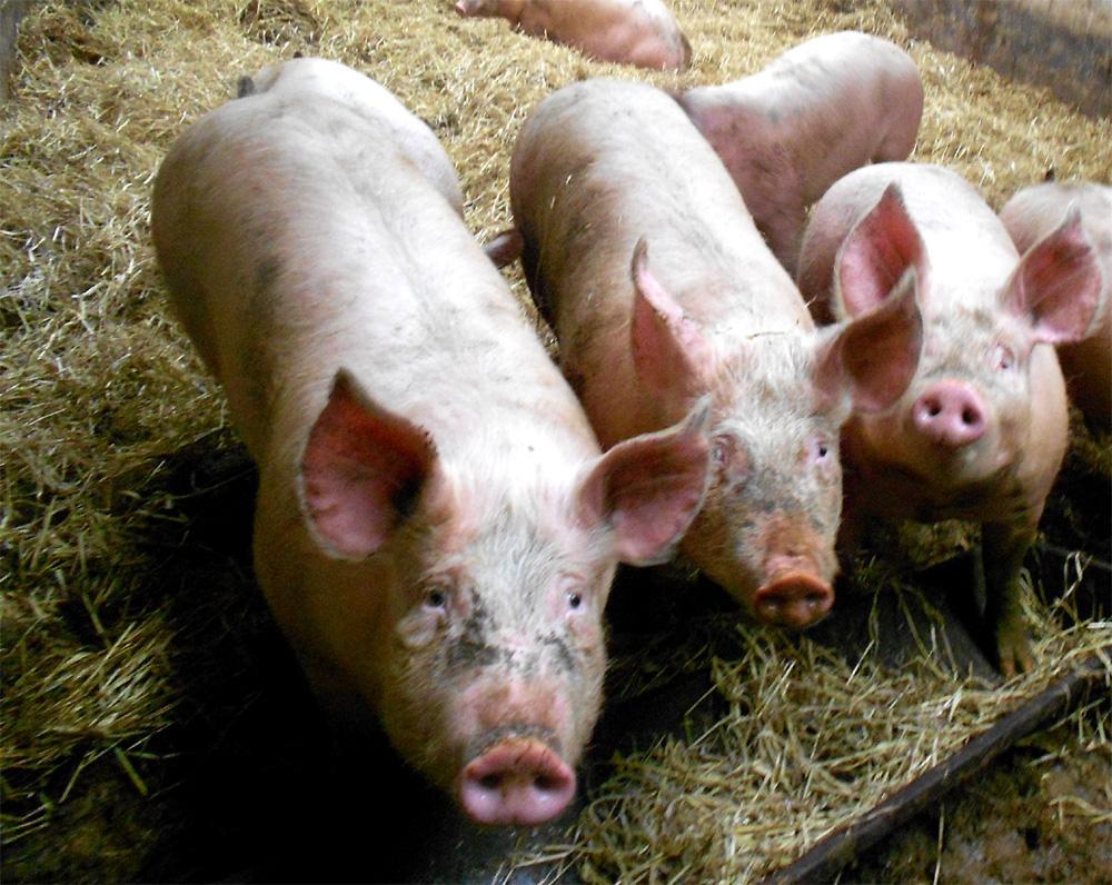 Caissette de porc - 10kg