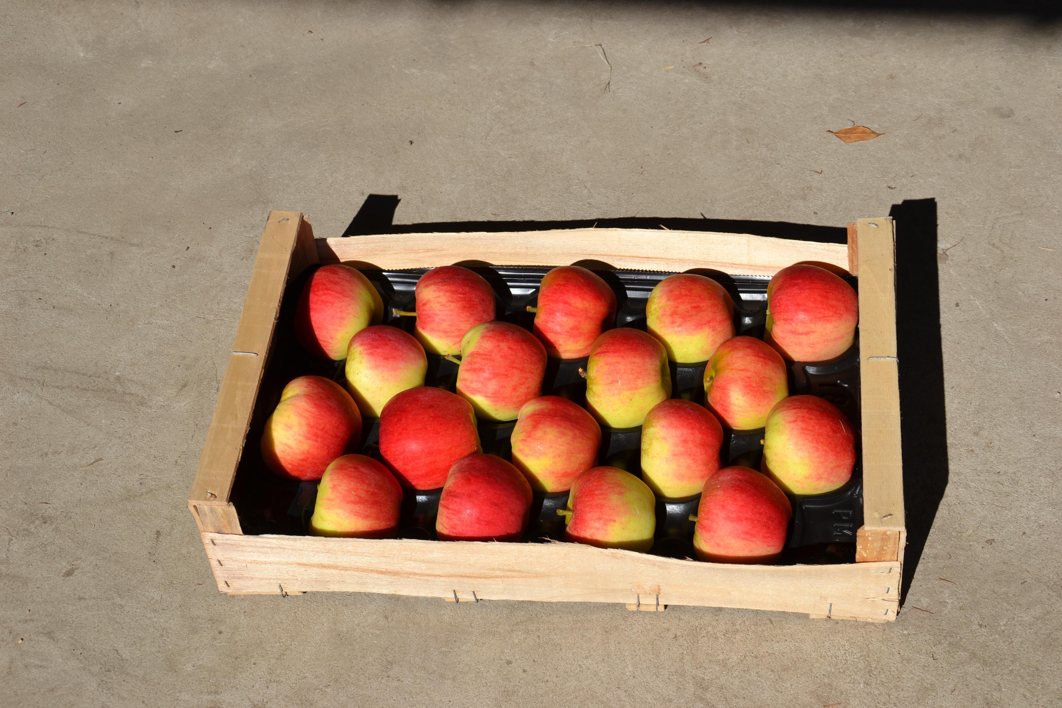 Plateau de pommes