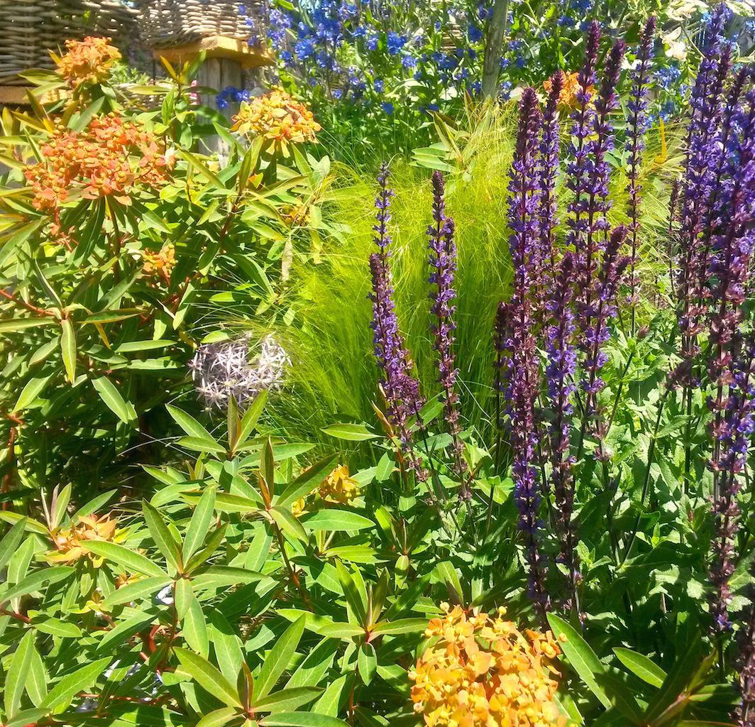production-plantes-vivaces -plantes méllifères