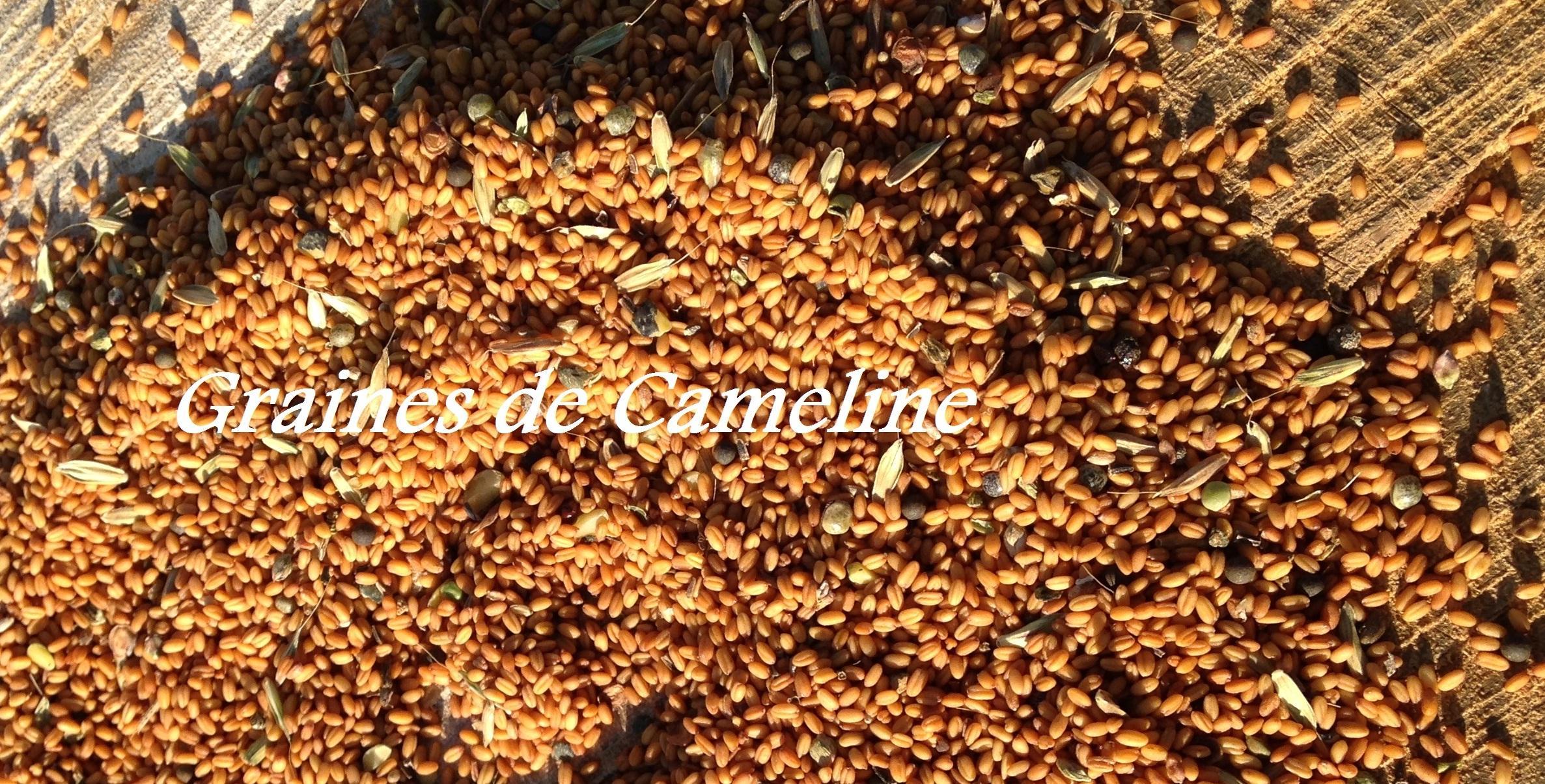 Huile de Cameline Bio