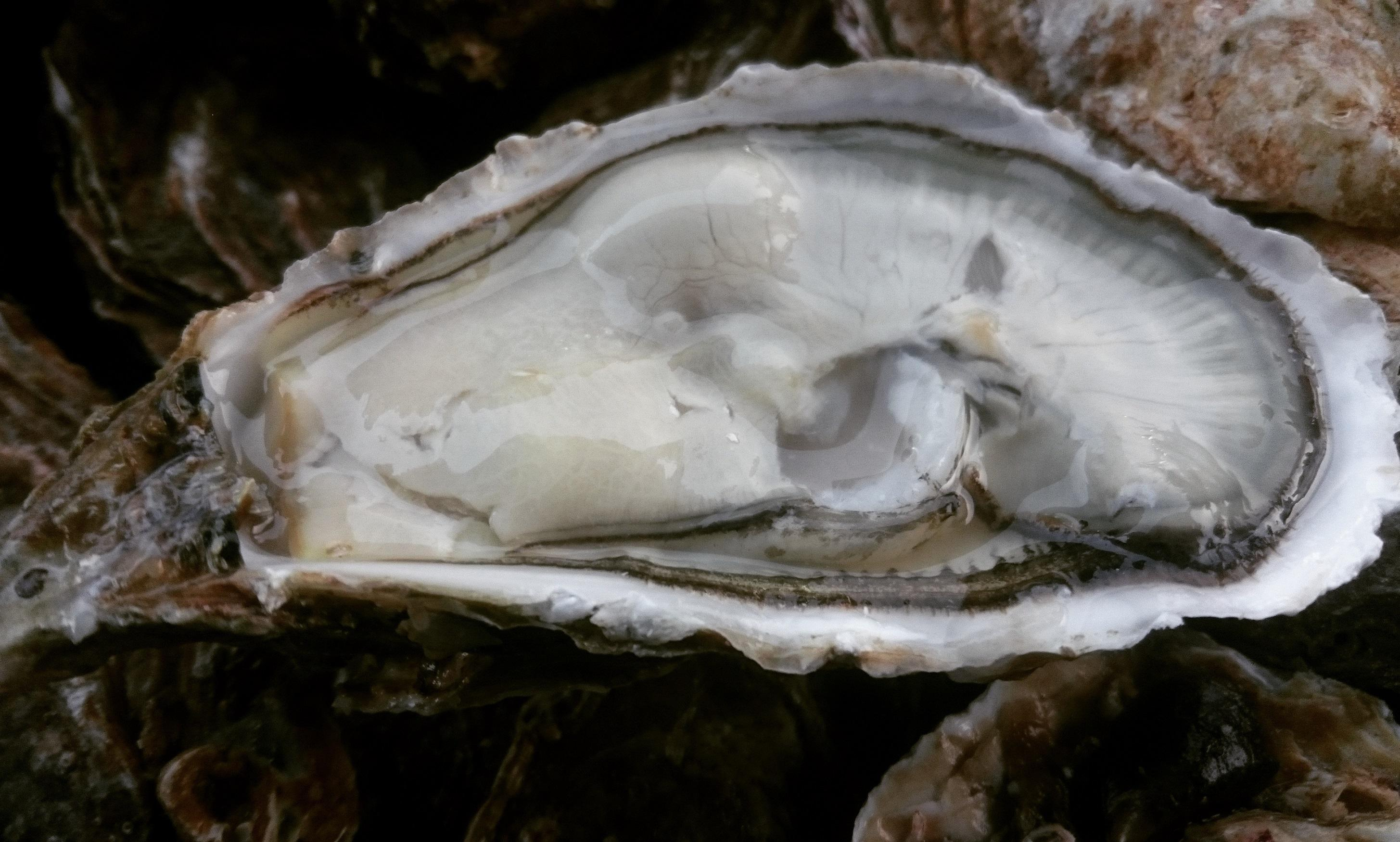 Notre huître Spéciale : LA TOULVERNE