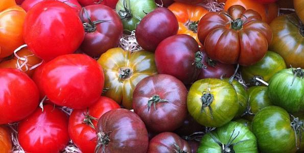 Tomates et tomates cerise BIO