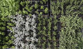 plants potagers et aromatiques biologiques