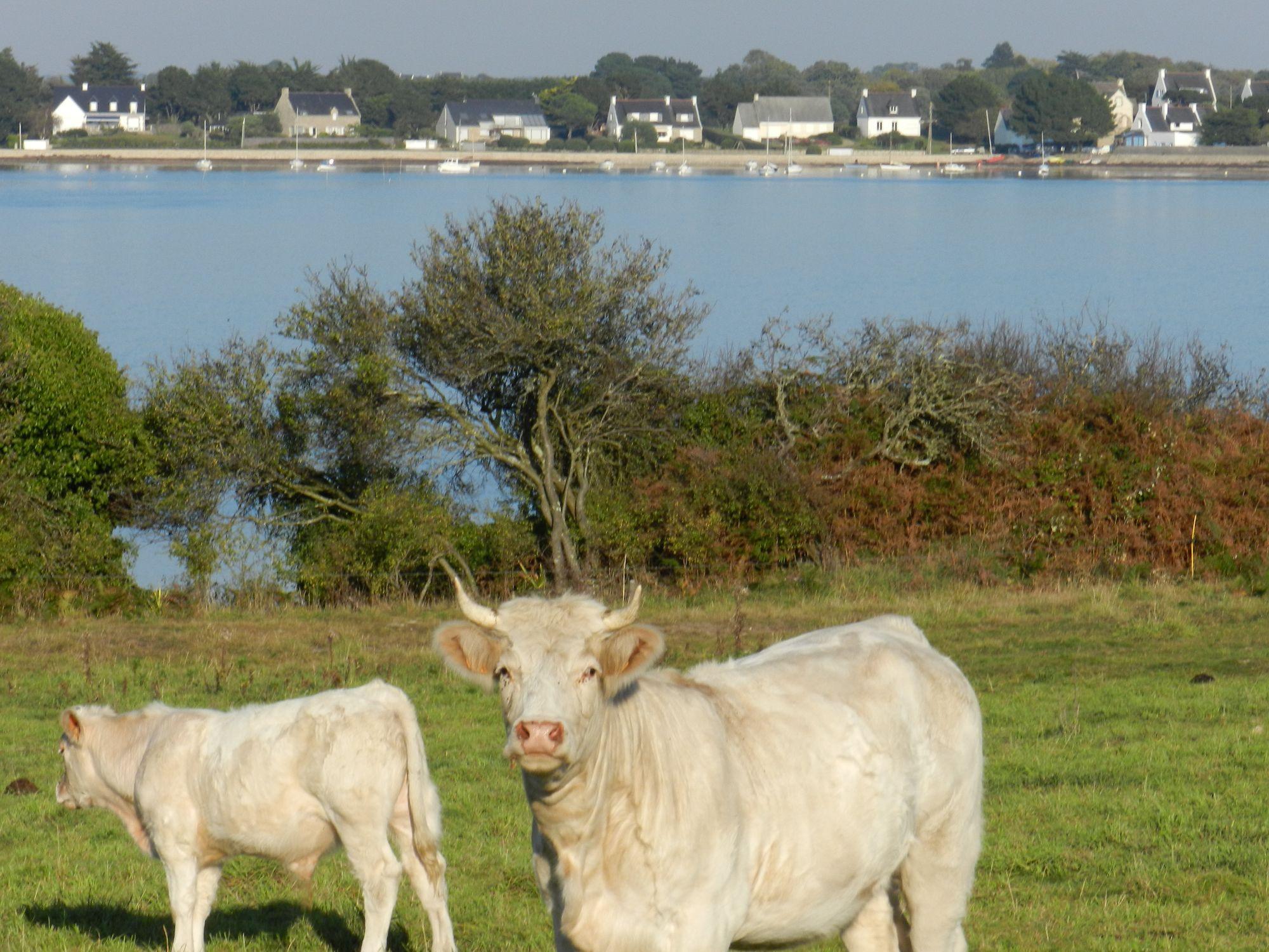 Vente de viande bovine