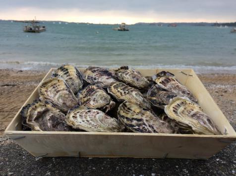 Huîtres De Pleine Mer N°3 - Bourriche De 50 Pièces