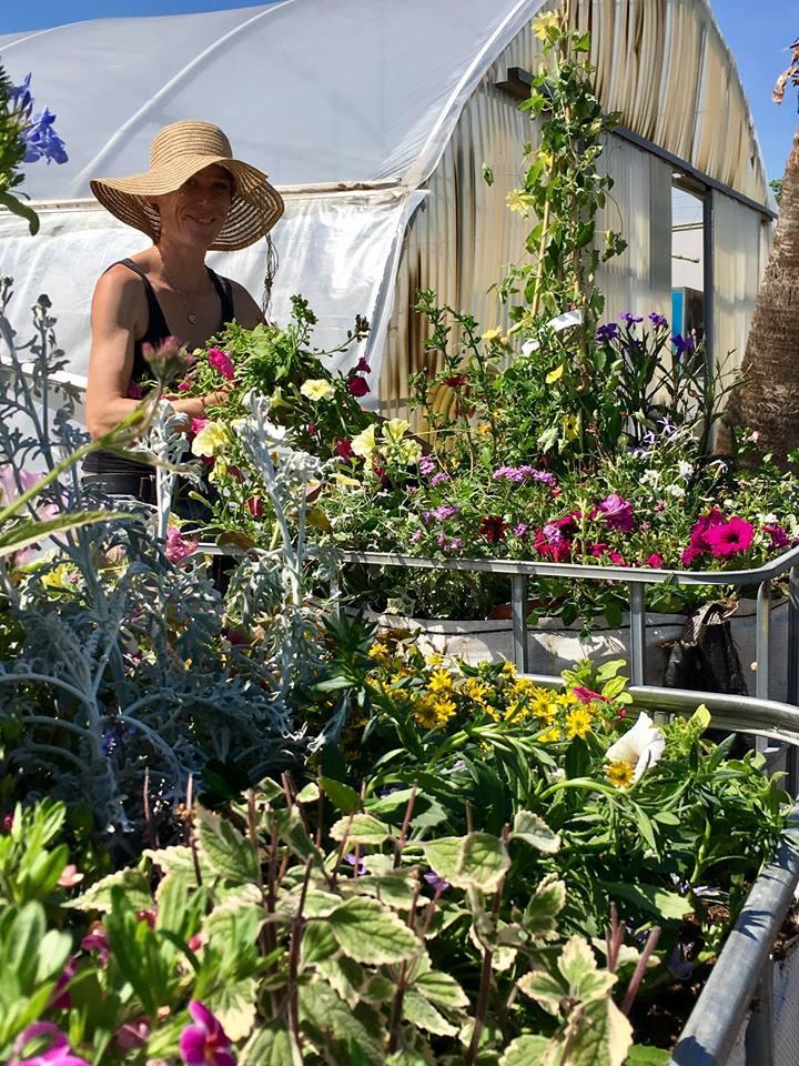 Plantes annuelles et vivaces