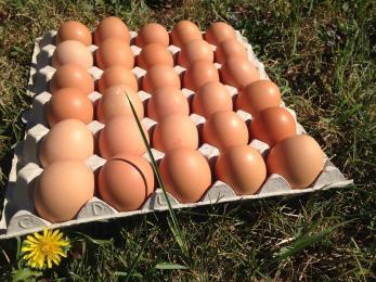 Oeufs Extra-frais Plein air Sans OGM