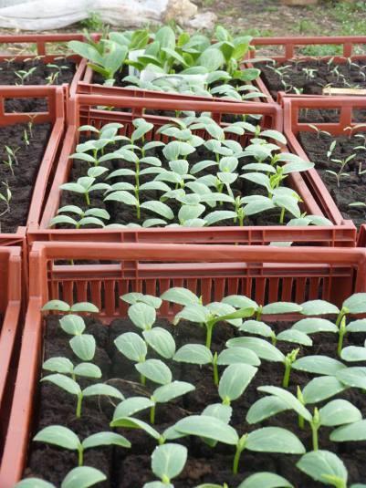 Plants et herbes aromatiques