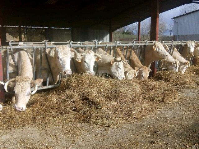 Colis de viande bovine blonde d'aquitaine