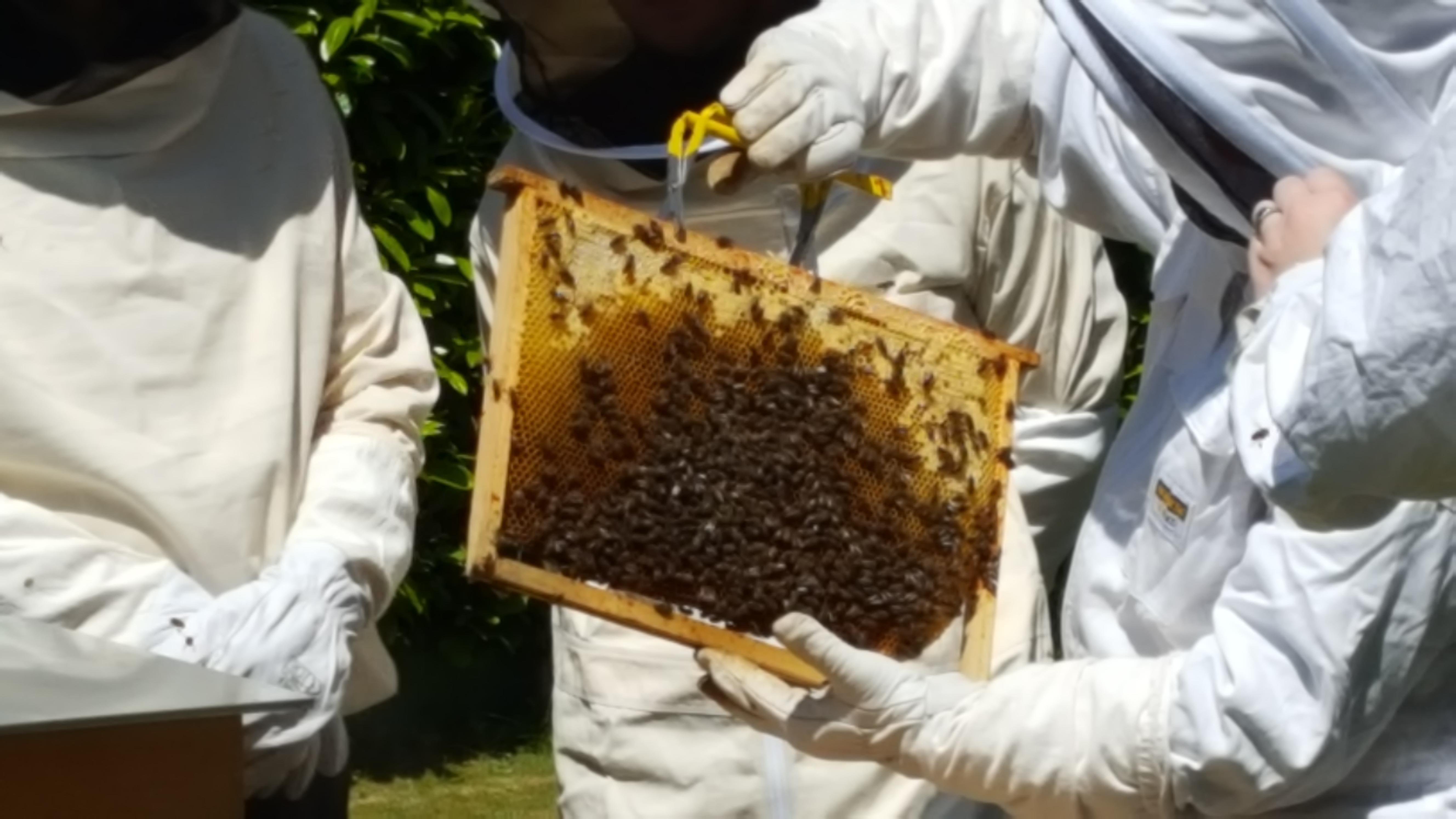 Formations à l'apiculture