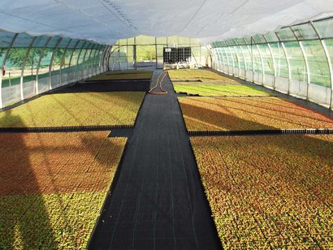 micro mottes de sedum pour toiture végétalisées