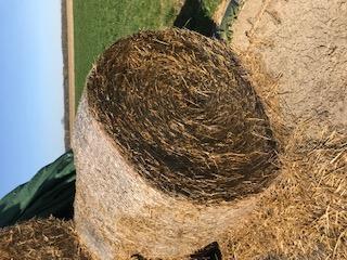 Rouleau paille de ble 1,5m diametre