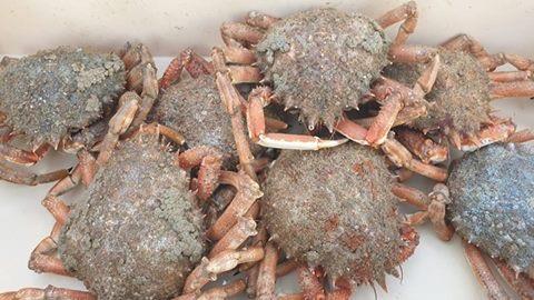 Moussettes et crabes