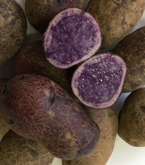 pomme de terre ulysse 5kg, 10kg, 25kg (le sac) biologique