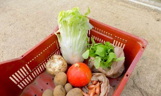 Panier de légumes bios 1/2 part