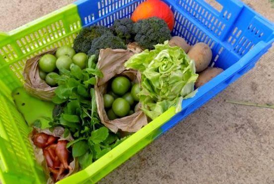 Panier de légumes bios 1 part