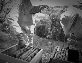 Atelier découverte de l'Apiculture