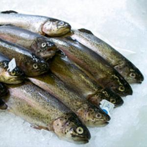 Truite saumonée élevage français