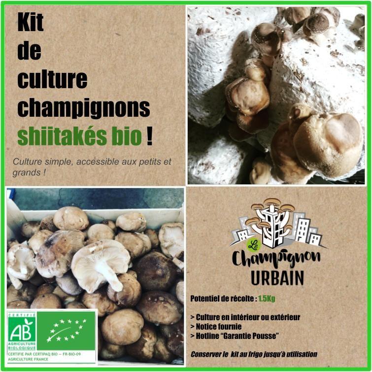 Kit de culture a shiitake a faire pousser chez vous