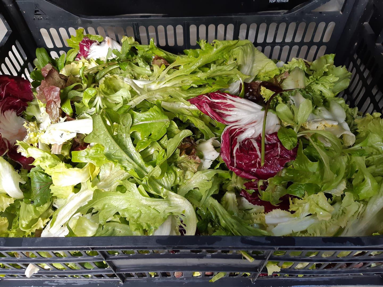 salade en mélange