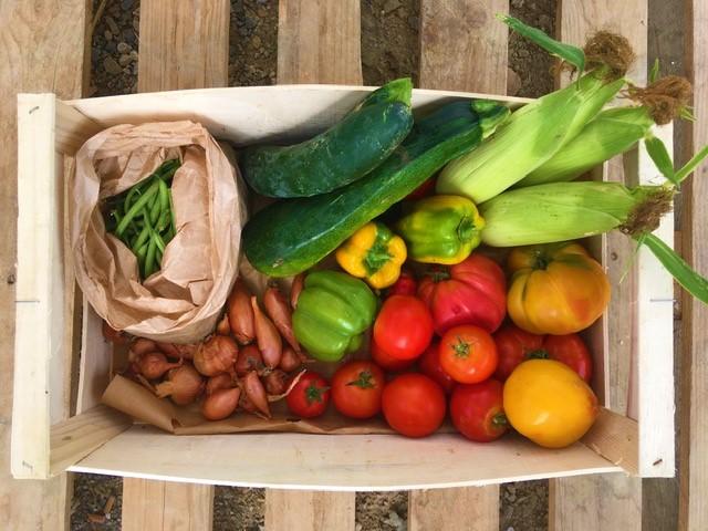 Panier de légumes 1 à 2 personnes
