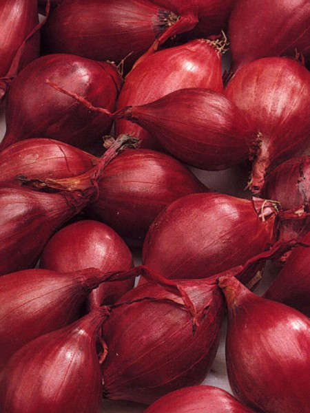 Oignons rouges (red karmen)