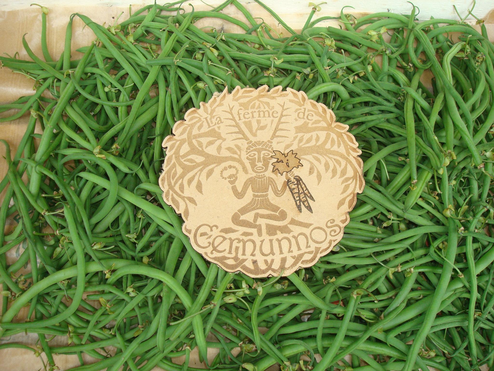 Haricots verts (AB)