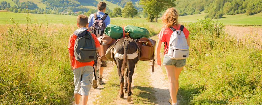 Les p'tits ânes: la 1/2 journée à 30 euros