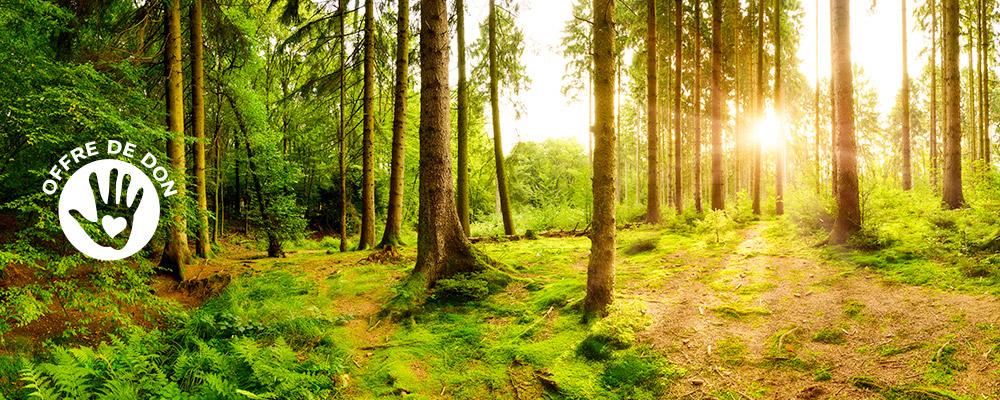 Plantons une forêt !